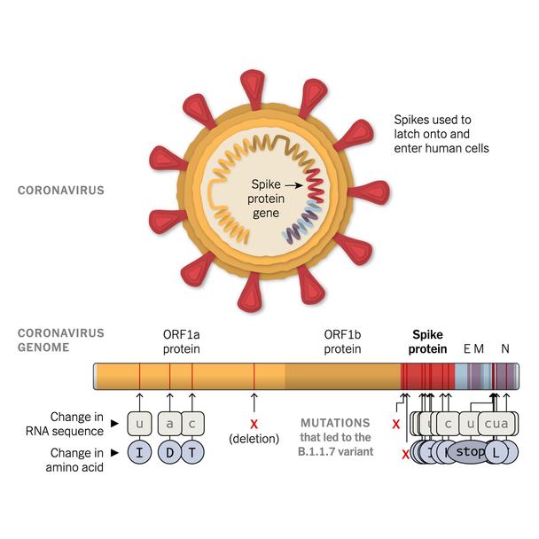 SARS-CoV-2 full-length Trimeric Spike Recombinant Antigen B.1.617.2 Mutation (Delta Variant)