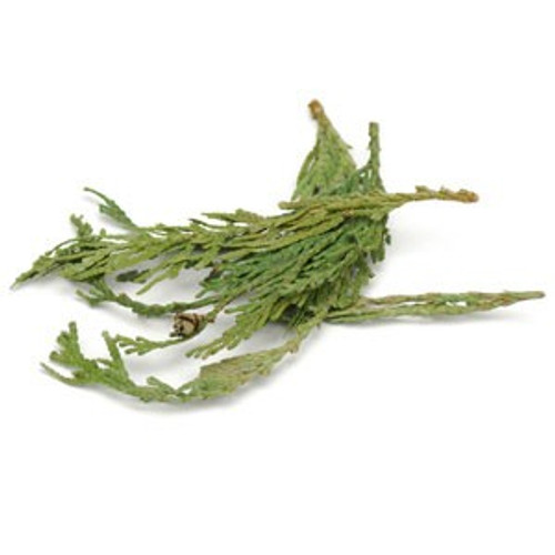 Cedar Tips Western Red Wildcrafted:Botanical Name: Thuja plicata Common Names: British Colombia red cedar, giant cedar, gigantic red cedar  Western Red Cedar Tips refers to the natural herb produced from the foliage. Dried Western Red Cedar Tips can be brewed up as tea.  Warning:For external use only.  Smudge Stick Bunldes Tea blends, Bath tea blends, decorative pieces in soaps, candles Important: Always brew with boiling water and let infuse for 5-10 minutes in order to obtain a safe beverage!  Guaranteed to be of the highest quality however, no claims are made about the effectiveness of this or any other wildcrafted herb, root, seed or other botanical extract. Those planning to purchase bulk herbs for any therapeutic purpose are advised to consult a licensed herbalist. Medicinal uses: fever, constipation, chest congestion, water retention.