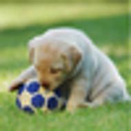 My Puppy Has A Harvard MBA