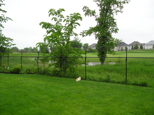Chain link conversion to cat fence
