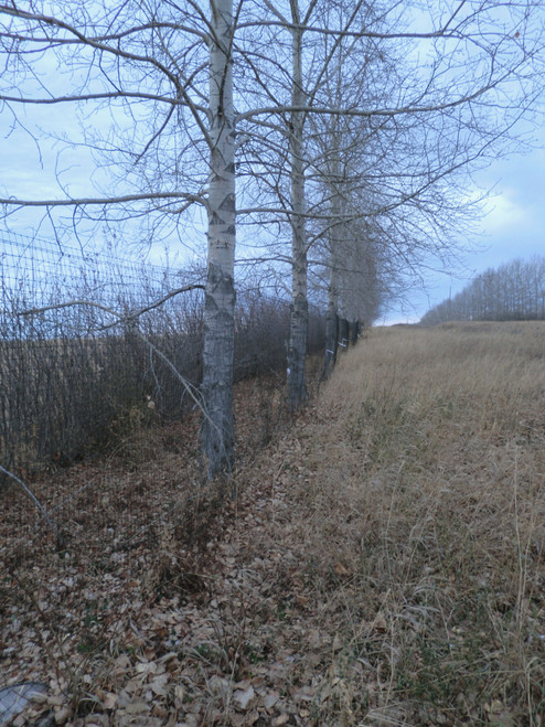 Fence using trees as supports