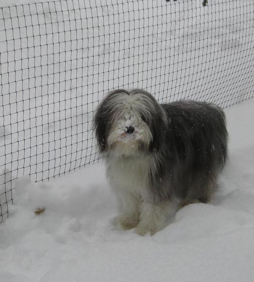 4 foot dog fence