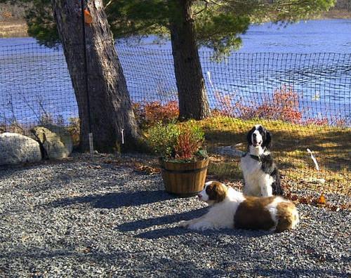 Dog fence at Cottage