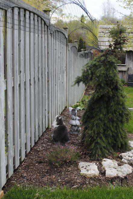100 ft Cat Fence conversion kit