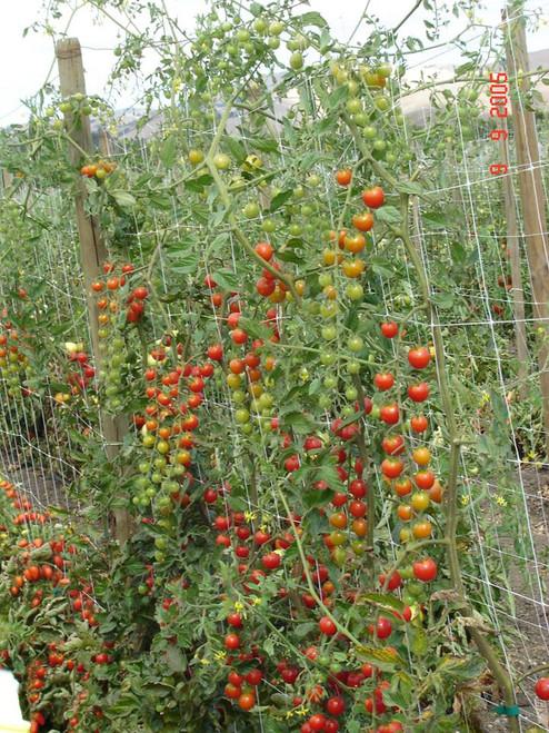 Hortonova Tomato Support