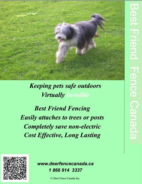 Best Friend Brochure cover