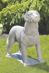 Labrador Retriever 31 inch