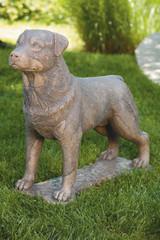 Rottweiler 30 inch