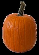 Orange Carving Pumpkin - X Large