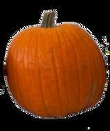 Orange Carving Pumpkin - Large