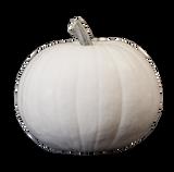 White Carving Pumpkin