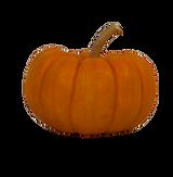 Orange Mini Pumpkin