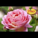 Digital Rose eGift Card