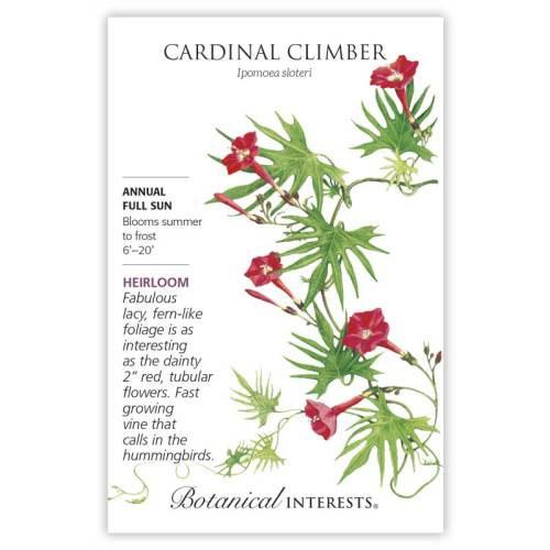 Cardinal Climber Seeds Heirloom