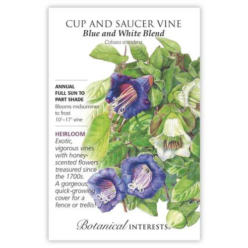 Blue and White Blend Cup and Saucer Vine Seeds Heirloom
