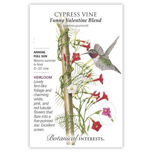 Funny Valentine Blend Cypress Vine Seeds Heirloom