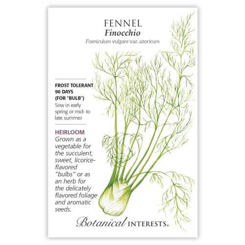 Finocchio Fennel Seeds Heirloom
