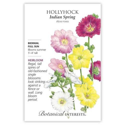 Indian Spring Hollyhock Seeds Heirloom