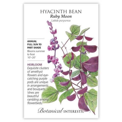 Ruby Moon Hyacinth Bean Seeds Heirloom