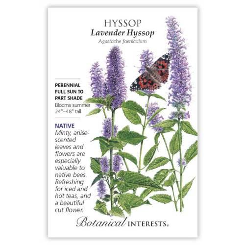 Lavender Hyssop Seeds Native