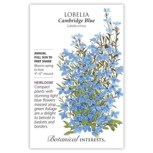 Cambridge Blue Lobelia Seeds Heirloom