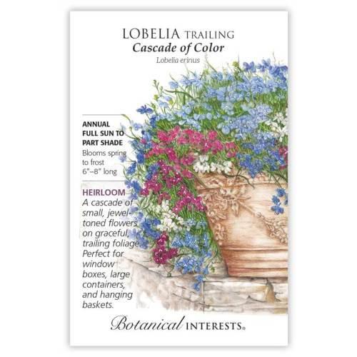 Cascade of Color Trailing Lobelia Seeds Heirloom