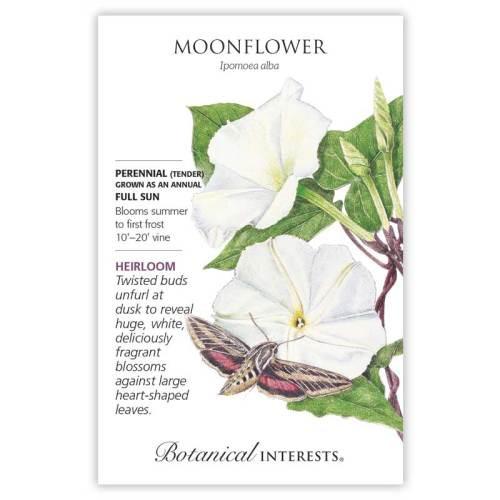 Moonflower Heirloom Seeds Heirloom