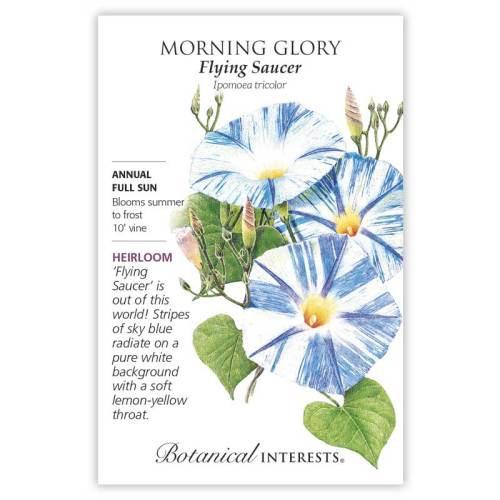 Flying Saucer Morning Glory Seeds Heirloom