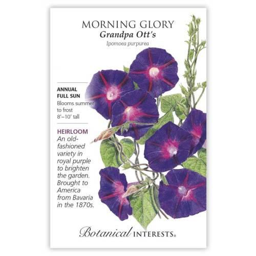 Grandpa Ott's Morning Glory Seeds Heirloom