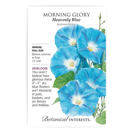 Heavenly Blue Morning Glory Seeds Heirloom