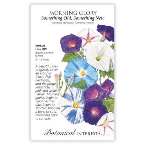 Something Old Something New Morning Glory Seeds
