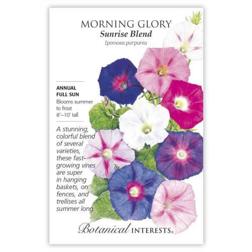Sunrise Blend Morning Glory Seeds