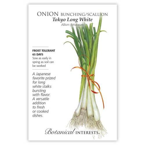Tokyo Long White Bunching/Scallion Onion Seeds