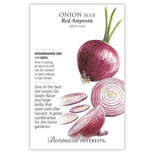 Red Amposta Bulb Onion Seeds