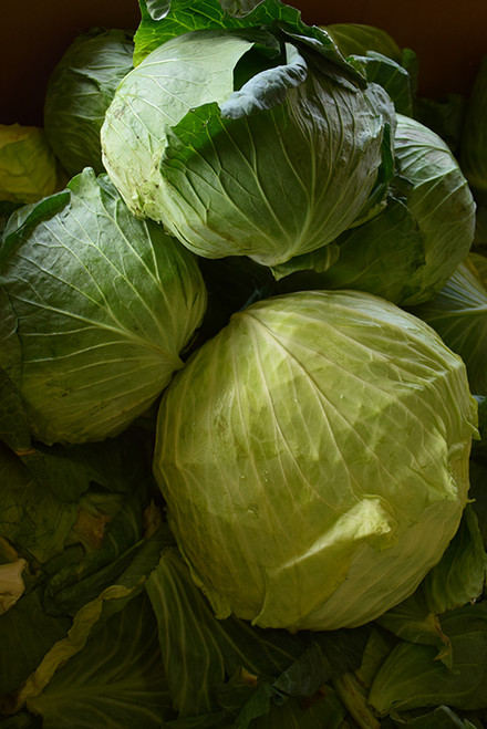 Vegetable Cabbage