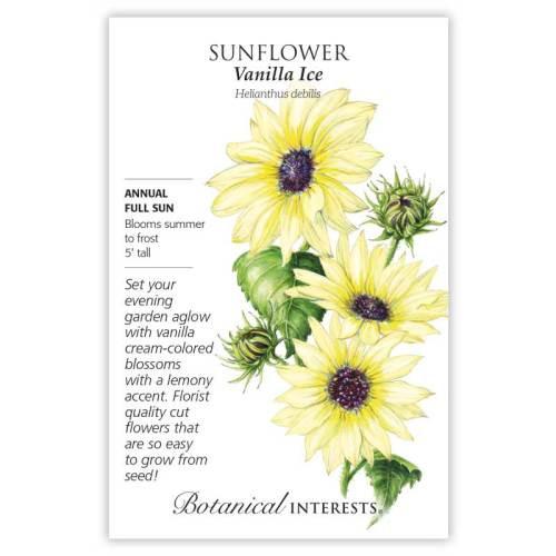 Vanilla Ice Sunflower Seeds