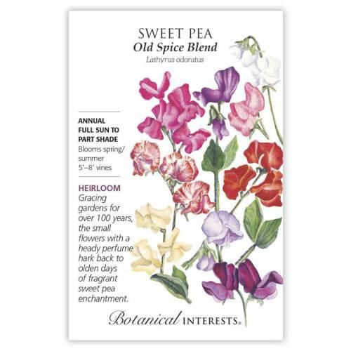 Old Spice Blend Sweet Pea Seeds Heirloom