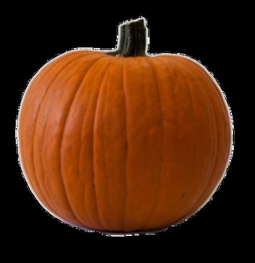 Orange Carving Pumpkin- Medium