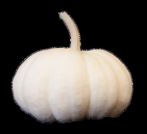 White Mini Pumpkin