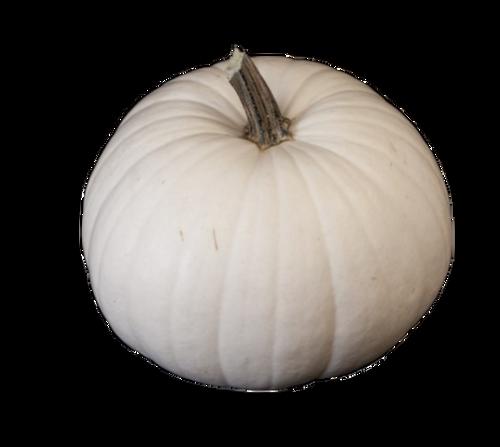 White Ghost Pumpkin