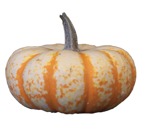 Tiger Stripe Mini Pumpkin