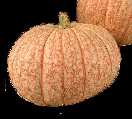 Tie-Dye  Pumpkin