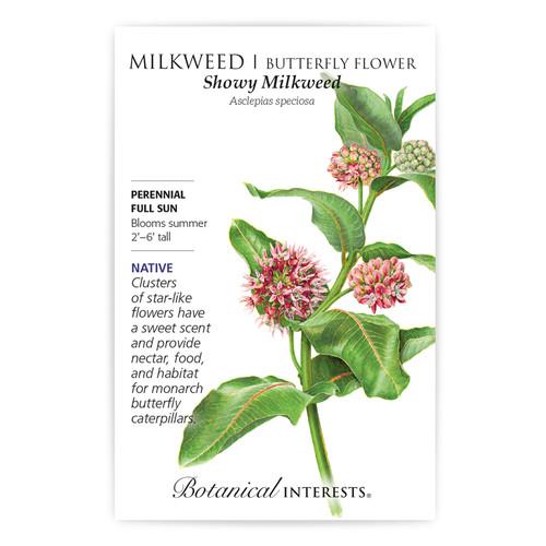 Showy Milkweed/Butterfly Flower Seeds Native
