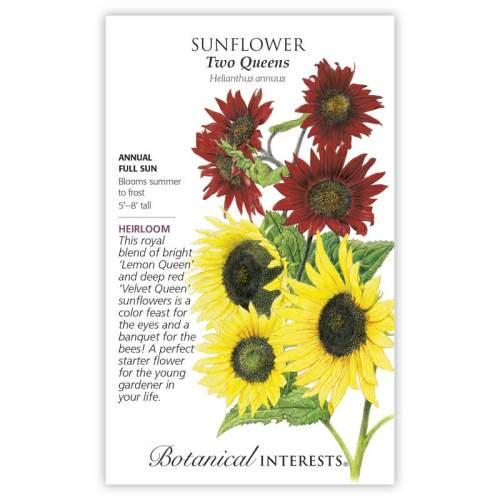 Two Queens Sunflower Seeds Heirloom