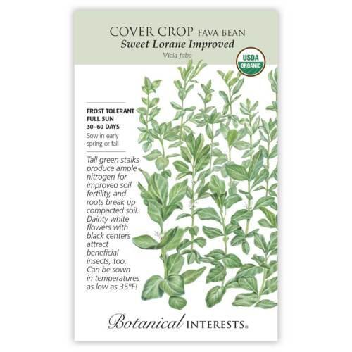 Sweet Lorane Improved Fava Bean Cover Crop Seeds Organic