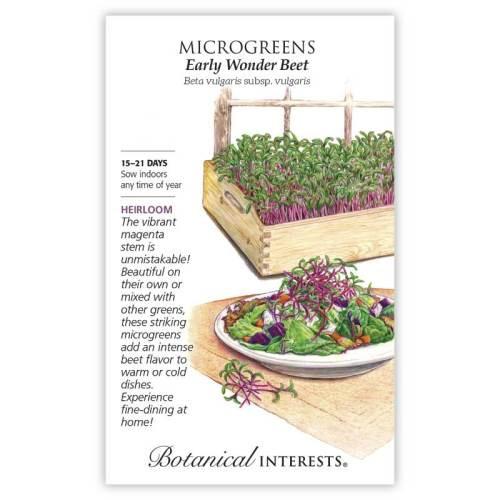 Early Wonder Beet Microgreens Seeds Heirloom