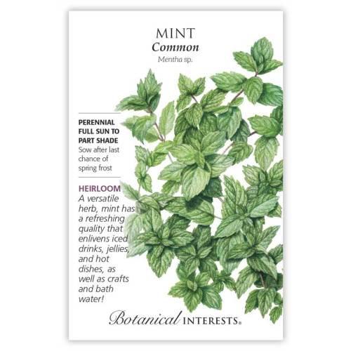 Common Mint Seeds Heirloom