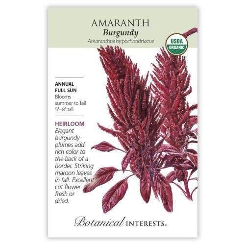 Burgundy Amaranth Seeds Organic Heirloom