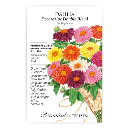 Decorative Double Blend Dahlia Seeds