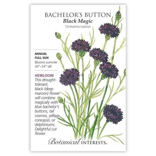 Black Magic Bachelor's Button Seeds Heirloom